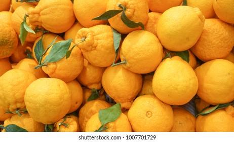 Korean style orange, hallabong (citrus spharocarpa) with one green leaf. Hallabong is a special kind of orange growing only in Korea. background