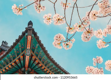 Korean traditional wooden eaves with cherry blossoms in Donghwasa temple, Daegu, Korea