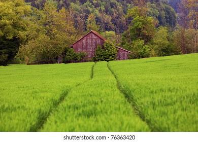 Kornfeld, Klettgau, Schweiz
