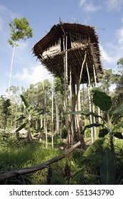 Korowai Treetop House Deep Inside the Forest. Papua, Indonesia