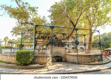 KOS, GREECE - JULY 30, 2014: The platan sycomore tree of Hippocrates with fountain