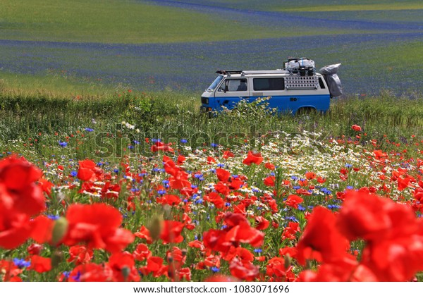 KOSTRZYN, POLAND, JUNE 18, 2013: Old Volkswagen vintage campervan cruising trough beautiful poppy field, Poland Europe