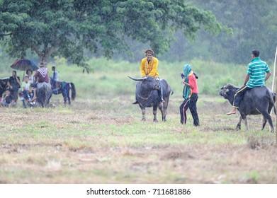 Kota Belud Sabah Malaysia - Oct 23, 2016 : Local man bajau samah competing in water buffalo race during event called Tamu Besar in Kota Belud Sabah. Soft focus.