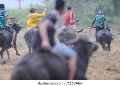Kota Belud Sabah Malaysia - Oct 23, 2016 : Local man bajau samah competing in water buffalo race during event called Tamu Besar in Kota Belud Sabah. Soft focus and blury image.