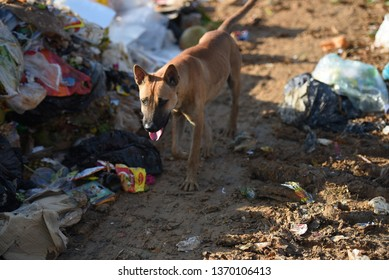 KOTA KINABALU, MALAYSIA - 15 APRIL, 2019: Photo of stray dog with blur and soft background. Potential virus once bitten by dog is rabies virus.