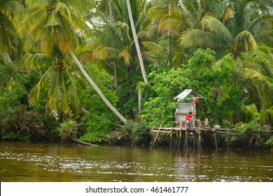 KOTA KINABALU, MY - JUNE 20: Klias River on June 20, 2016 in  Malaysia. Klias river is a Mangrove Forest Reserve and a ecotourism destination wherein you can see proboscis monkey in the trees.