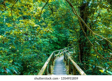 Kota Kinabatangan, Sabah, Malaysia - Juli 27 2014: Walkway through the jungle to the Gomantong Caves, a traditional place for harvesting birdnests