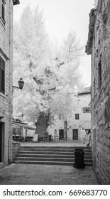 KOTOR - JUNE 3: Old tree in old town on June 3, 2017 in Kotor, Montenegro