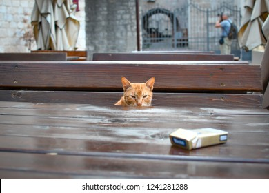 Kotor, Montenegro - September 20 2018: A stray orange tabby cat sits at an outdoor cafe in the Adriatic town of Kotor, Montenegro.