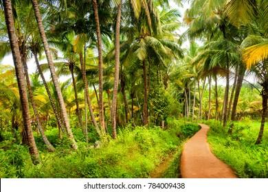 Kovalam, Kerala, India - October 17, 2007 :  A narrow pathway leading to a village near the Kovalam coast in Kerala