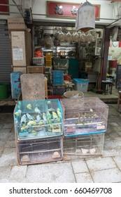 KOWLOON, HONG KONG - APRIL 21, 2017: Canary Birds in Cages Yuen Po Street Bird Garden in Kowloon, Hong Kong.