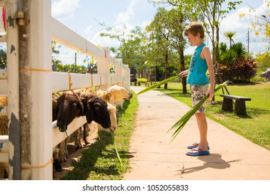 Krabi, Thailand: MARCH 19, 2018: Kids at Dairy Hut Farm in Phang Nga area.