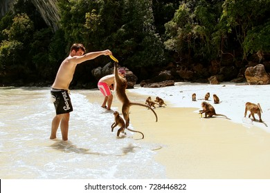 KRABI, THAILAND - NOVEMBER 30: Unidentified men feed crab-eating macaques on Phi Phi Don Island on November 30, 2007 in Krabi Province, Thailand. This island is part of a marine national park.