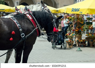 Krakow, Lesser Poland, Poland - 14 July 2012: Carriage horse on Main Market Square