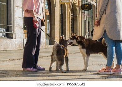 Krakow, Poland - 04 10 2021: Friendship between dogs in the city during a morning walk