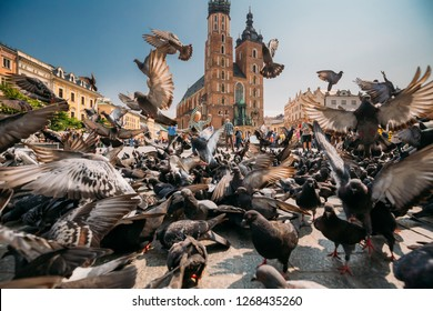 Krakow, Poland - August 28, 2018: Boy Playing With Doves Birds Near St. Mary's Basilica. Pigeons Take-off Flying Near Church Of Our Lady Assumed Into Heaven. UNESCO World Heritage Site.