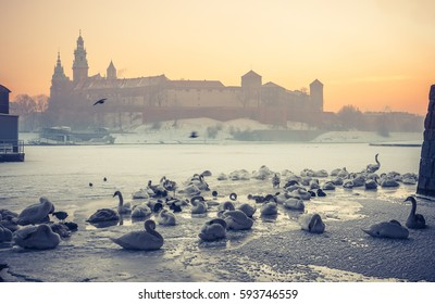 Krakow, Poland, Wawel Castle and Wawel cathedral in the winter over frozen Vistula river in the morning with swans