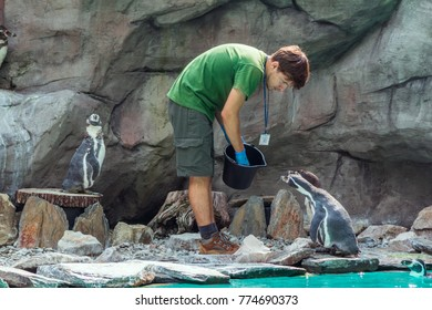 Krakow/Poland- August 14, 2017:Krakow zoo staff – young man, wearing uniform, feeding penguins with fish, standing on a rocky coast of artificial pond