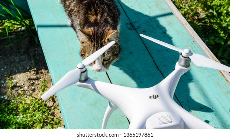 Krasnodar, Russia - April 14, 2017: The cat sniffs the drone DJI phantom 4. Surprise the animal with a new gadget. Quadrocopter and pet. Cat and drone.