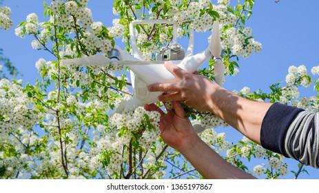 Krasnodar, Russia - April 14, 2017: Quadrocopter DJI Phantom 4 is on the branch of blooming cherry plum.