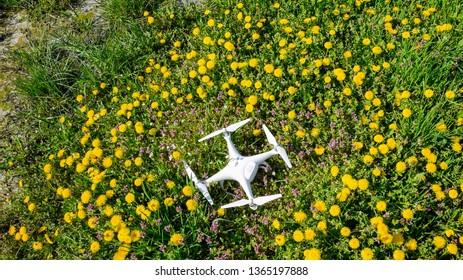Krasnodar, Russia - April 14, 2017: Quadrocopter DJI Phantom 4 is on a clearing with dandelion flowers.