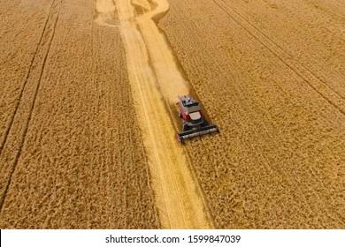 Krasnodar, Russia - July 22, 2017: Harvesting wheat harvester. Agricultural machines harvest grain on the field. Agricultural machinery in operation.