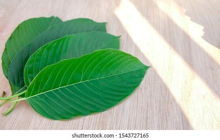kratom leaf (Mitragyna speciosa) Mitragynine on wooden ,Drugs and Narcotics,Thai herbal which encourage health