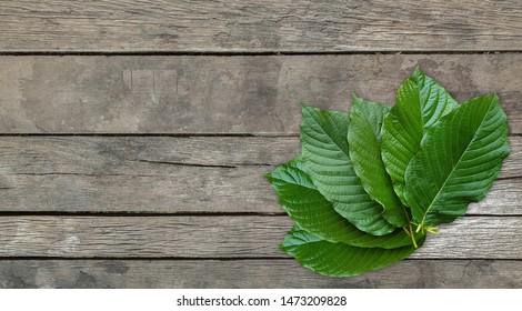 Kratom leaves.Mitragyna speciosa leaf on wooden table background. Close up of Mitragyna speciosa leaf, plant in thailand, Kratom is Thai herbal which encourage health.