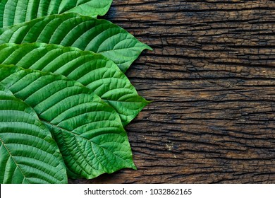 Kratom or Mitragyna speciosa leaves isolated on the wood background, top view