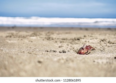Krebs kommt aus dem Sand.