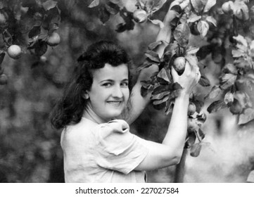 KROSNO,POLAND - CIRCA 1945: vintage photo of woman in orchard about apple tree