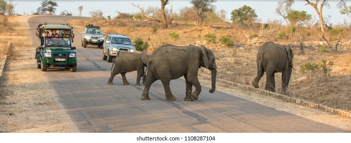 Kruger National Park, South Africa - 6 November 2016: Tourists in safari vehicles, stop on a road in Kruger National Park to watch a herd of elephants  passing by.