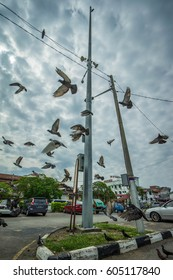 KUALA KANGSAR, PERAK, MALAYSIA - 18 MARCH 2017 pigeon flying around the streets of Kuala Kangsar Town
