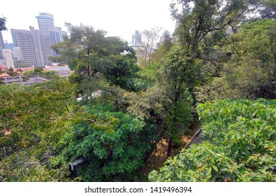 Kuala Lumpur, Malaysia - April 21, 2019: Bukit Nanas KL Forest Eco Park (Taman Eko Rimba KL), a permanent rainforest reserve at the foot of the KL Tower with an impressive Canopy Walk.