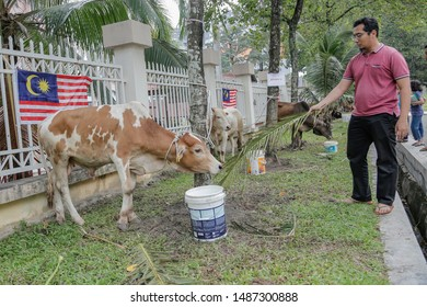 Cow Slaughter Images, Stock Photos & Vectors   Shutterstock