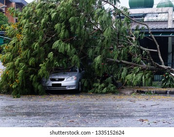 """Kuala Lumpur, Malaysia- March 10,2019: A picture of a fallen tree destroyed car and gates after catastrophic nature disaster. A few people dead in this incident."""