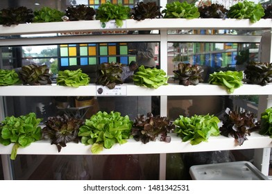 KUALA LUMPUR, MALAYSIA -NOVEMBER 23, 2018: Vegetables and flowers in the plant nursery planted using a multi-storey hydroponic method to save space used. It is supplied by nutrient using water as the