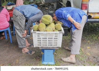 Kuala Pilah, Malaysia-January 1st, 2018 : Unidentified sellers unloading durians from truck and there is weight measurement of durian on the roadside