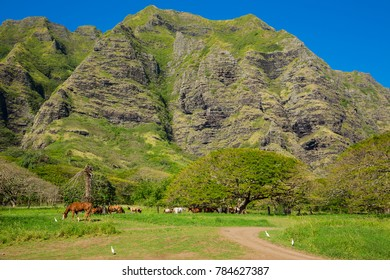 Kualoa rach in Hawaii with hores and mountain