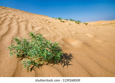 Kubuqi desert in the Chinese province of Inner Mongolia, one of the biggest and driest deserts in China.