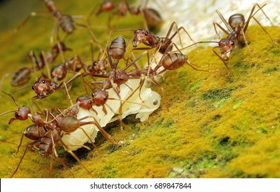 Ants Eating Images, Stock Photos & Vectors | Shutterstock