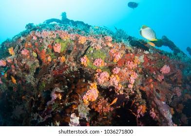 Kuda Giri shipwreck, Maldives.