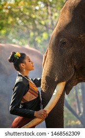 Kui's young Women wearing native dresses are living with elephants. Asian woman hugging a big elephant in the Forest. Elephant with beautiful girl in asian countryside, Surin, Thailand.