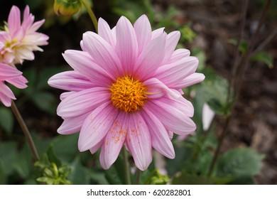 Kula Flower Power