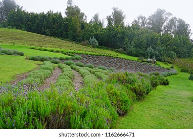 KULA, HI -31 MARCH 2018- View of the landmark Alii Kula Lavender Farm, located on the misty slopes of the Haleakala Volcano on the Hawaiian island of Maui. It includes a botanical garden.