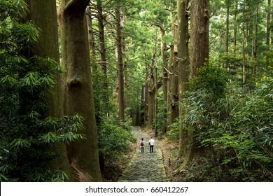 """Kumano Kodo"" (Old pilgrimage road in Kumano district of Japan)"