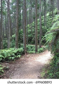 Kumano Kodo; Pilgrimage Routes, World Heritage Site in Japan