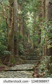 """Kumano Kodo"" trail in nachisan mountain (Old pilgrimage road in Kumano district of Japan)"