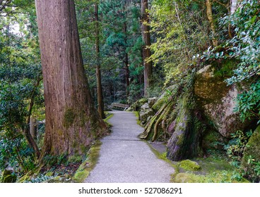 Kumano Kodo trail, a sacred trail in Nachi, Wakayama, Japan. Nachi is part of Yoshino-Kumano National Park in Wakayama.