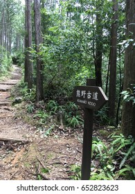 The Kumano Kodo(a series of ancient pilgrimage routes in Japan)